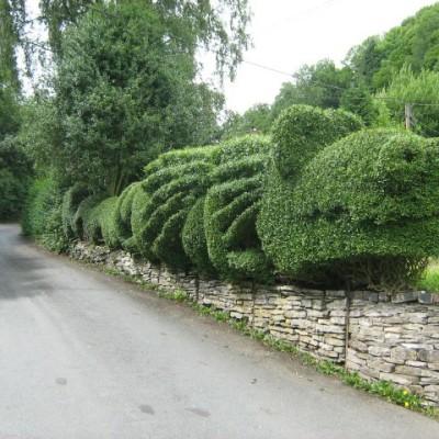 dragon hedge